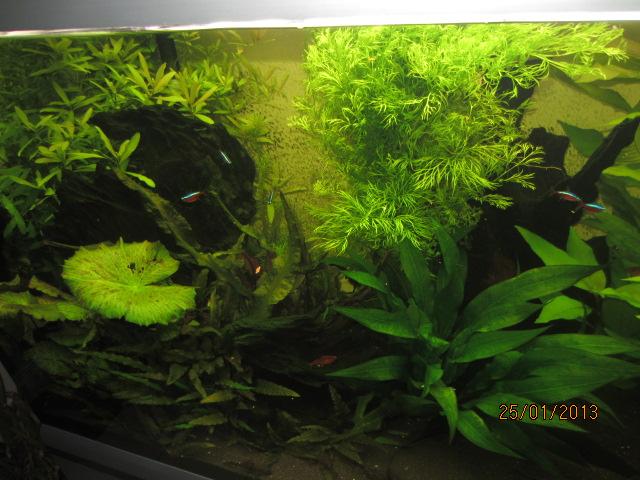 la vie de mon aquarium entretien de l 39 aquarium. Black Bedroom Furniture Sets. Home Design Ideas