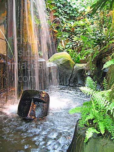 A Walk Through the Jungle at Victoria Butterfly Gardens | Clydeside ...