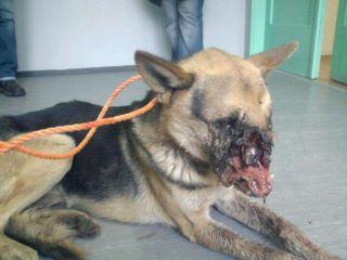 violencia Animal