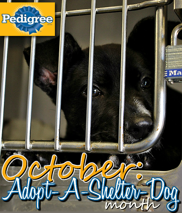 For every Pedigree product you buy at Sam's Club in October 2014 #PedigreeGives one bowl of dog food to a shelter in need! #Shop