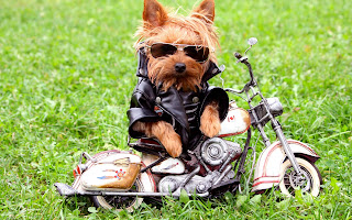 Perrito carismático en su motocicleta funny dog