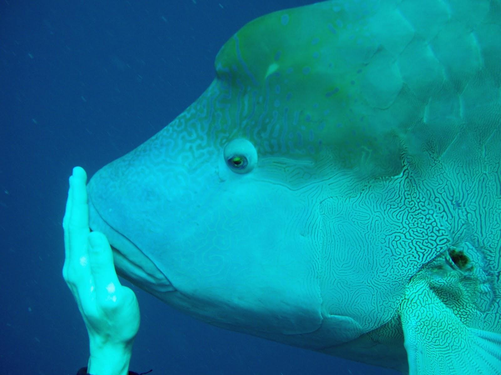 great barrier reef hajer