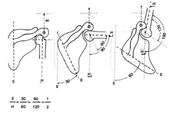 biomecanica de hombro pdf