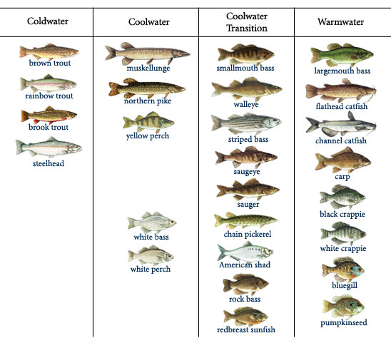 different types of fishes names