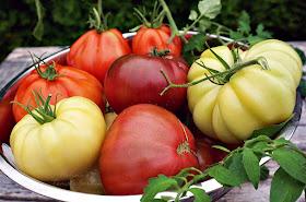 Assorterte tomater