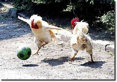 meme Todos Adoram Futebol Ate As Galinha