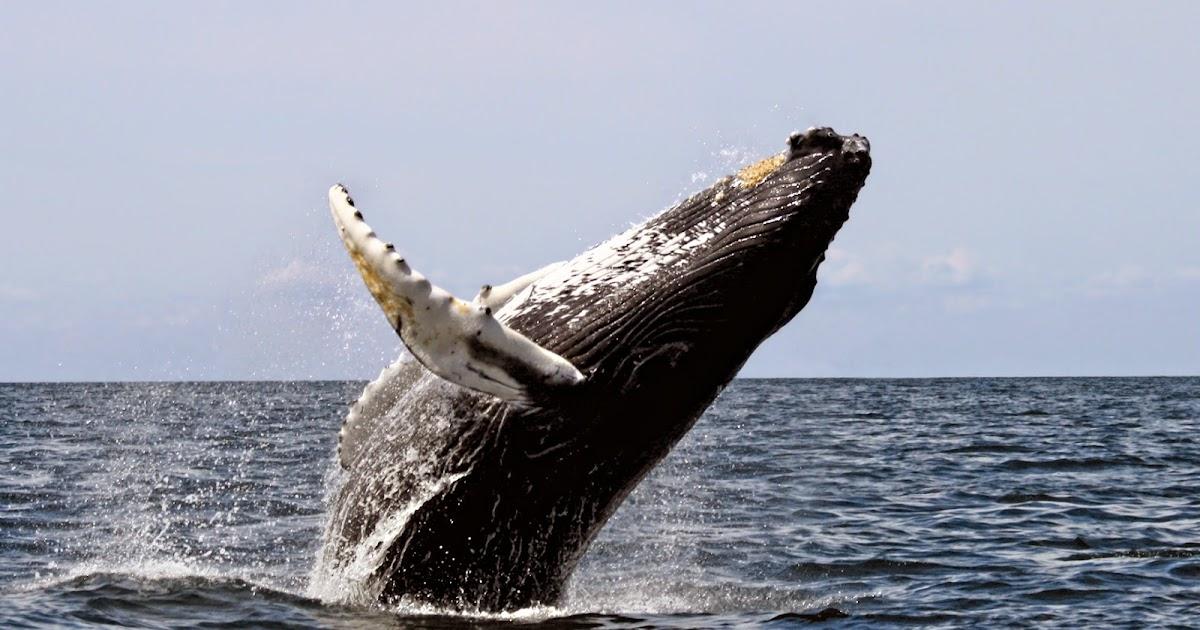 من النبي الذي اكله الحوت
