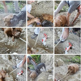 Dog buried alive in France, dog cruelty, dog, France