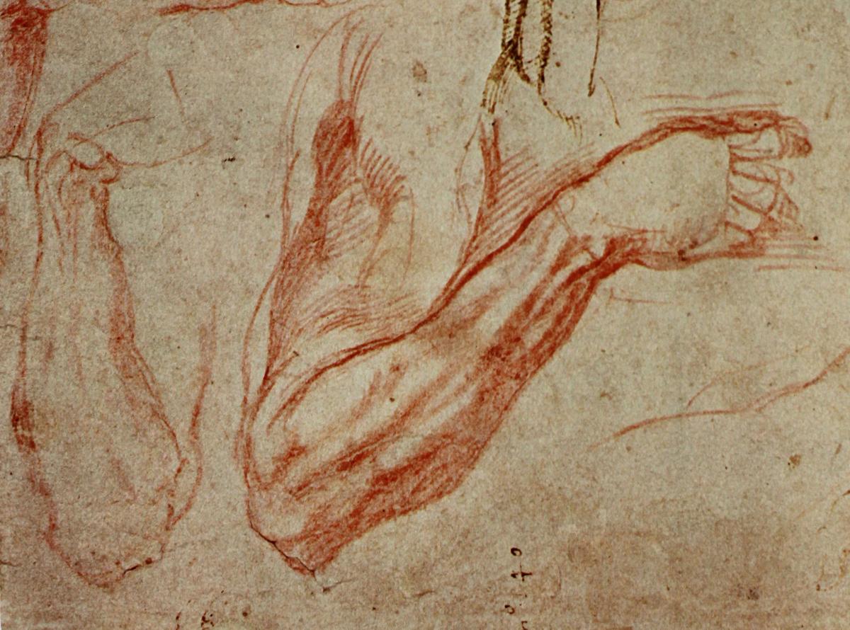 The Classical Pulse: Michelangelo: Arm Studies, Part 2