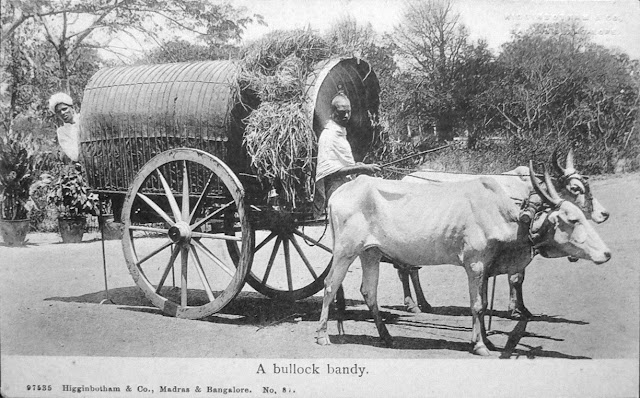 A-Bullock-Bandy---Vintage-Postcard