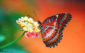keistimewaan mitos dari kupu kupu