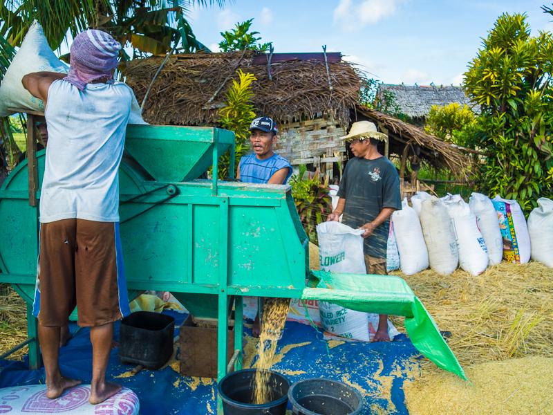 planting_rice_plants