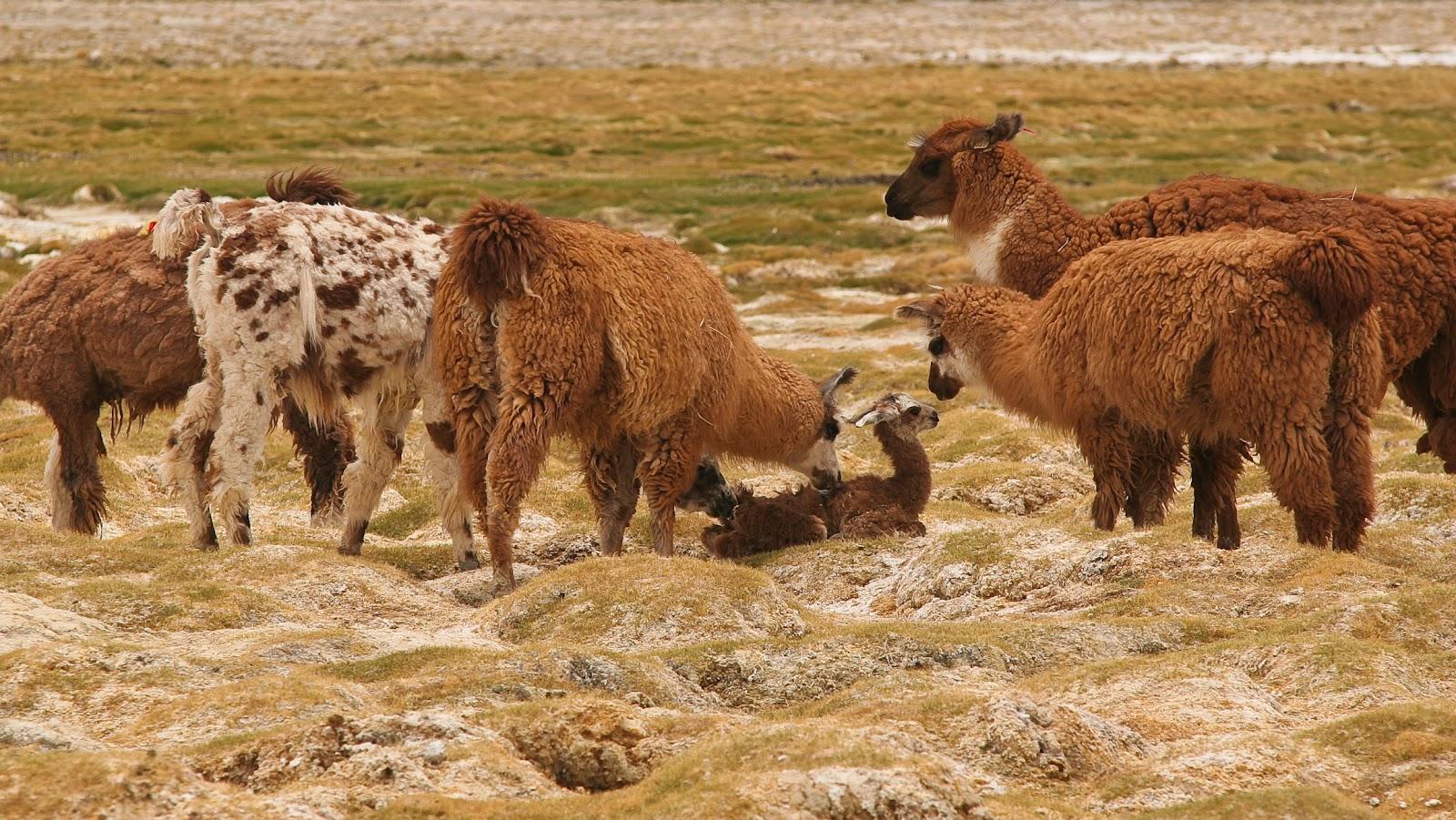 fotos de animales del desierto - Santuario Animal Del Desierto A C Fotos Facebook