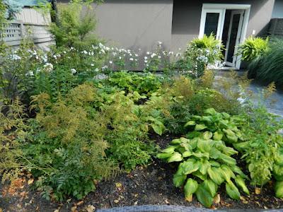 Honorine Jobert Japanese anemone x hybrida by garden muses-not another Toronto gardening blog