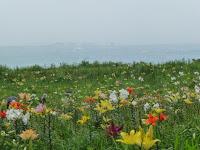 展望台で竹生島を観るがもやってみえない・・・
