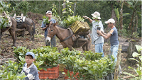Asociación de Juntas de Agua del Sector Sur del Parque Nacional Pico Bonito (AJAASSPIB), Honduras