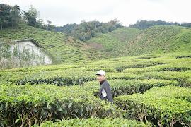 teh garden,cameron
