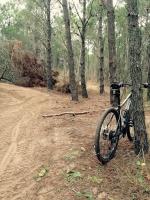bosques de la reserva y camino de cuatriciclos en cariló