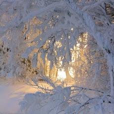 E' arrivato l'inverno 2012 e' caduta la prima neve