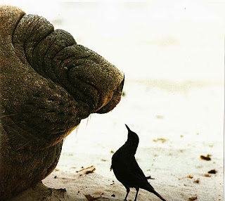Черный дрозд и морской слон