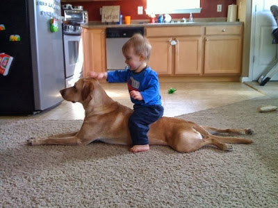 Cute Baby Boy and Lovely Pet
