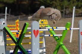 entrenamiento del conejo
