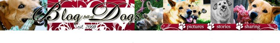 Blog Full of Dogs