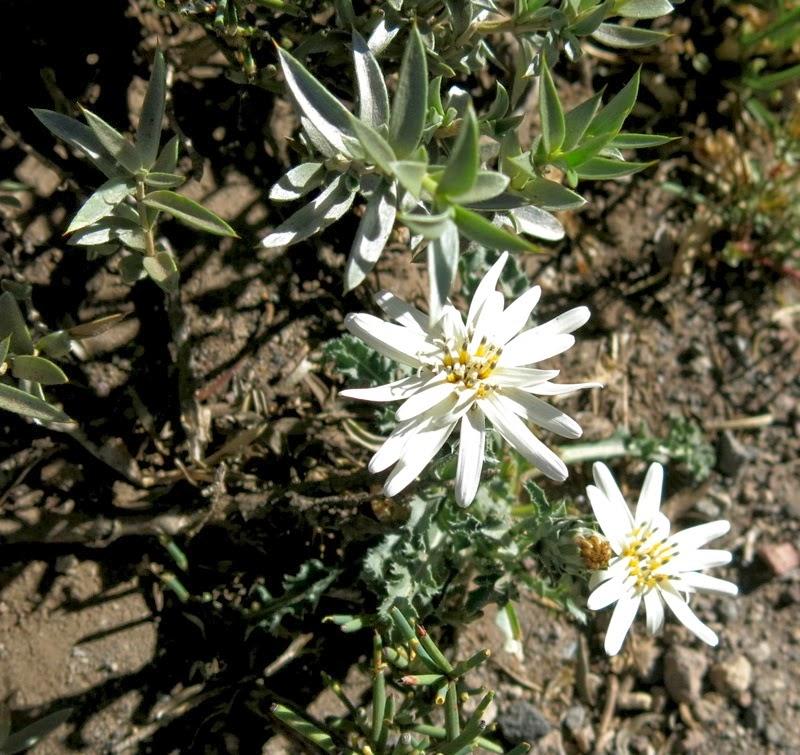 Unbekannte Blume in weiß