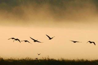 Cementerios naturales de animales ¿Mito o realidad? Aldea-Dzhatinga