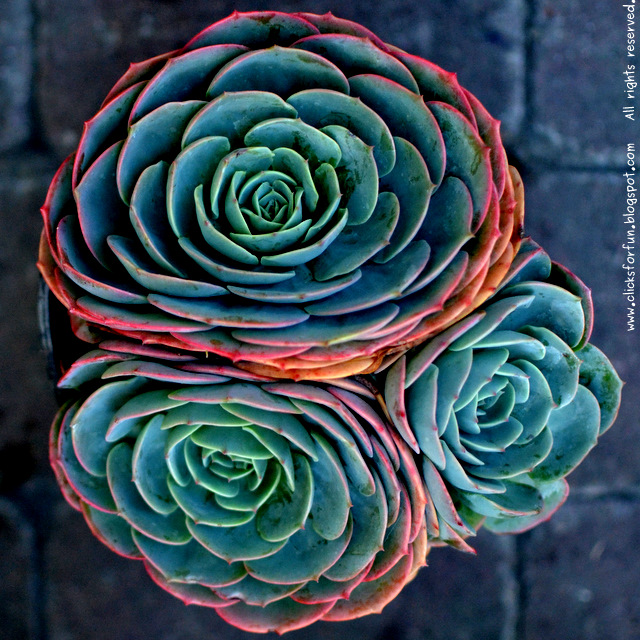 Houseplants Succulents Easy Gardening Photography Blogger Nature