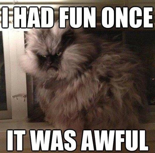 Funniest Meme Captions : Funny animal captions part pics amazing