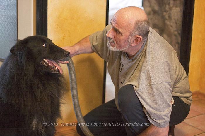 Niekonwencjonalne metody groomingu. Pielęgnacja sierści psa w domu. Pielęgnacja sierści owczarka belgijskiego