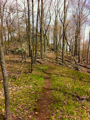 The Menuntuck Trail, Guilford CT