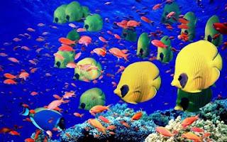 Fish of the ocean