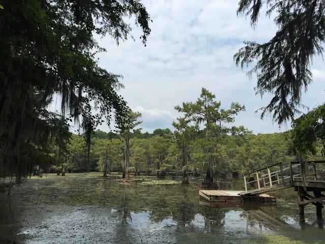 Les eaux verdâtres du Caddo Lake et son ponton