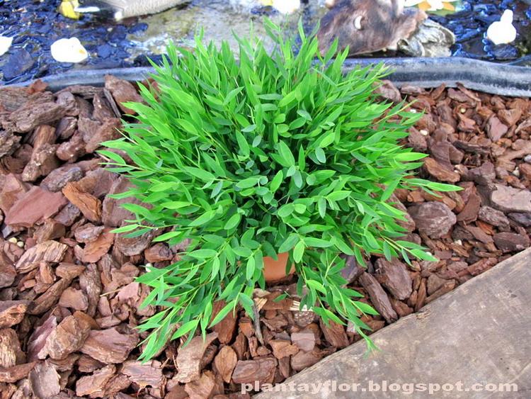 Plantas ornamentales tipos for 6 plantas ornamentales