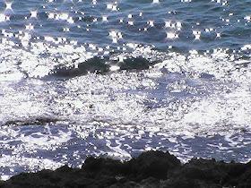 estrellas en la mar