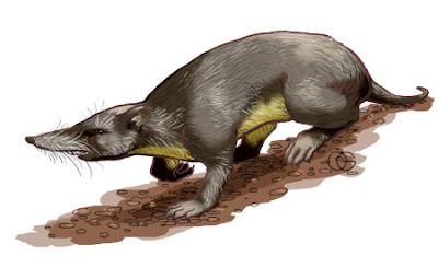 musaraña edit isleña Nesophontes edithae mamiferos extintos