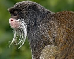 Động vật có bộ râu độc đáo