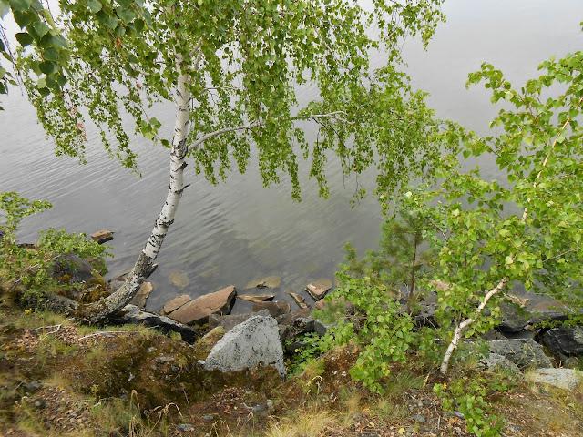Берёза склонилась над озером Большие Касли