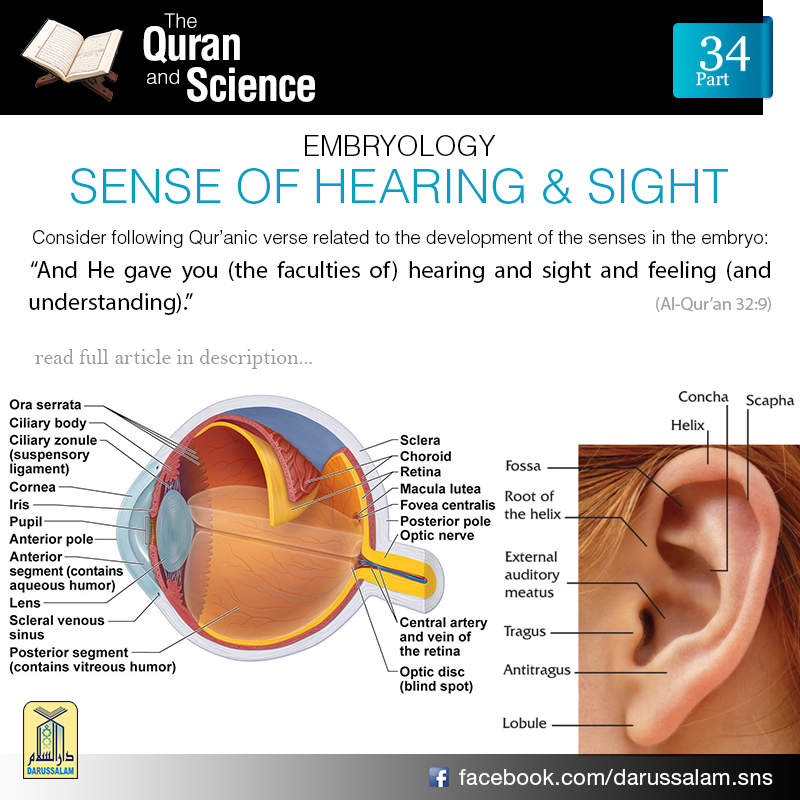 development of the senses How do you define who you are in this lesson, we will explore the different aspects that form our sense of self and examine how it develops then.
