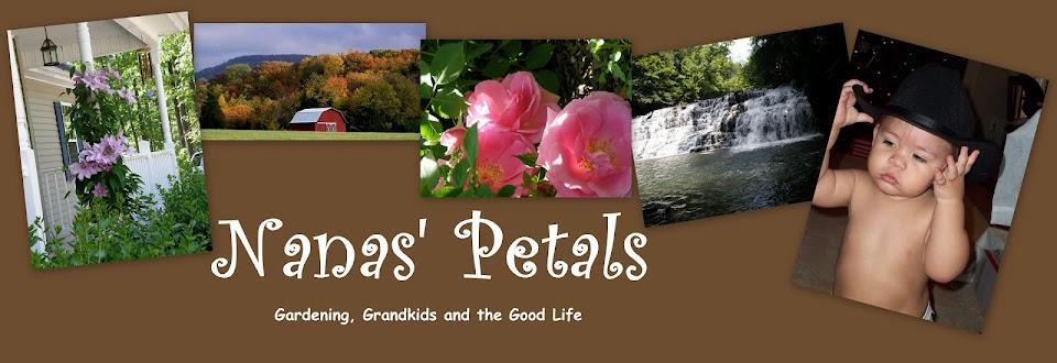 Nanas Petals