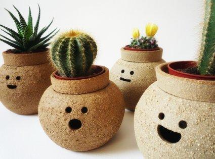 Decora el hogar macetas y plantas para el interior del hogar for Oficinas decoradas con plantas
