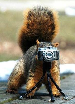 esquilo fotografia