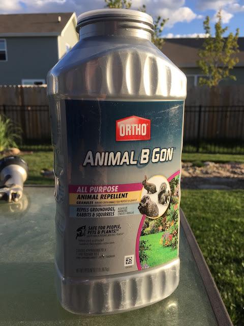 animal b gon