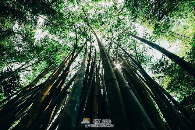Bamboo Walk in Bukit Nanas Forest Reserve - Taman Eko Rimba Kuala Lumpur