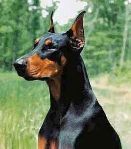 Top 10 Worlds Smartest Dog Breeds doberman pinscher
