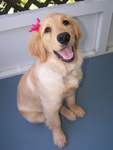 Check out our Guide Dog puppy Ellie
