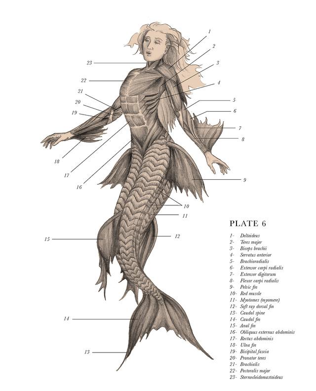 Nag on the Lake: A Gray\'s Anatomy of Mythological Creatures