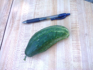 small, fat cucumber